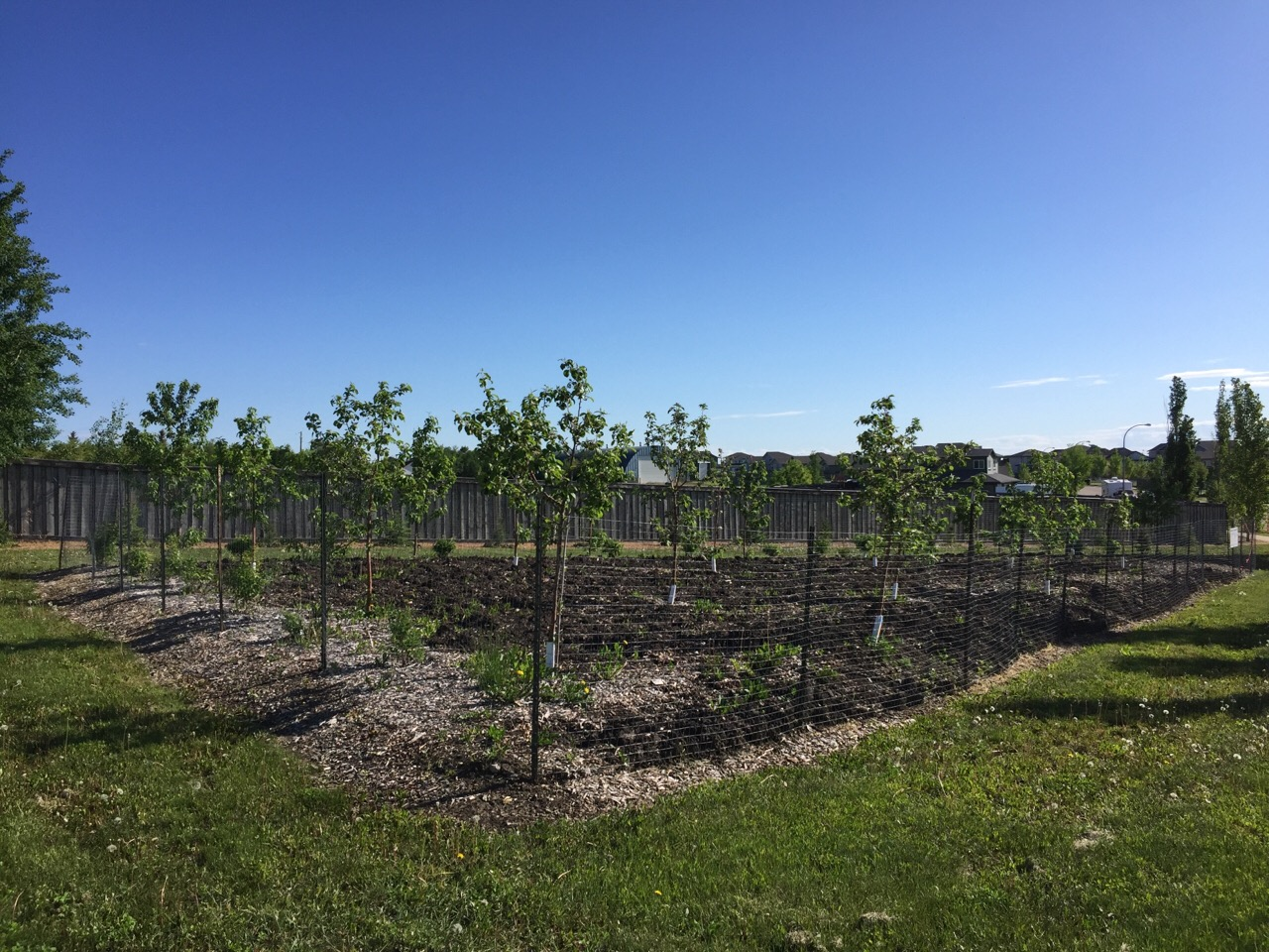 Copperwood Orchard